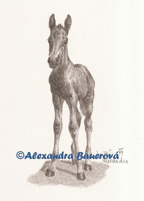 Kůň - hříbě