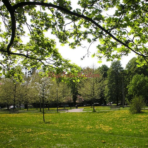 Jaro v městském parku I