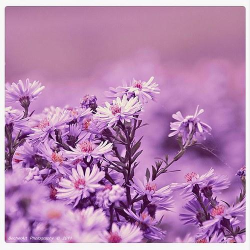 Violet Dreaming
