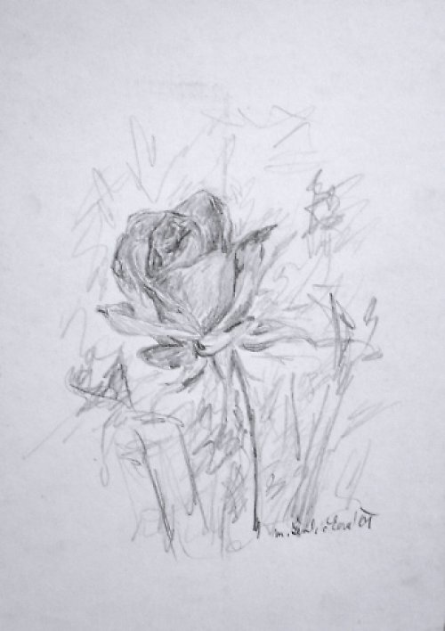 Růžička. Kresba.