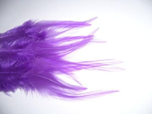 Kohoutí peříčka fialová 2 ks