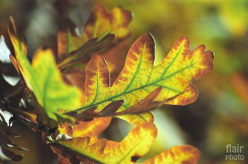Podzimní I