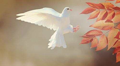 Vzkaz od anděla
