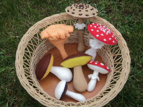 ...Jako houby po dešti