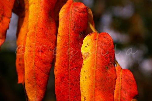 Podzimní oranžáda