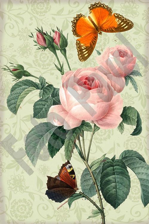 Vintage motiv - motýl a růže