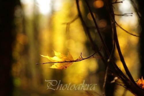 Podzimní opojení