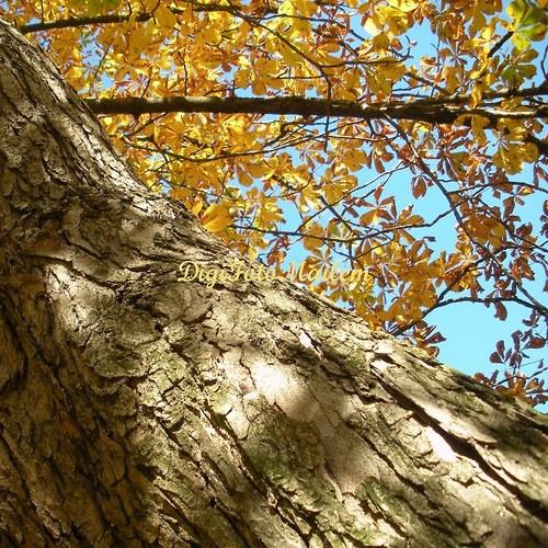 Strom v podzimním hávu I