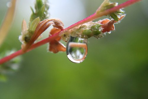 Dešťová kapka