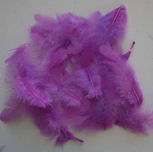 Peří fialové - 20 ks