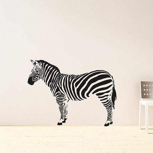 Zebra - VELKÁ