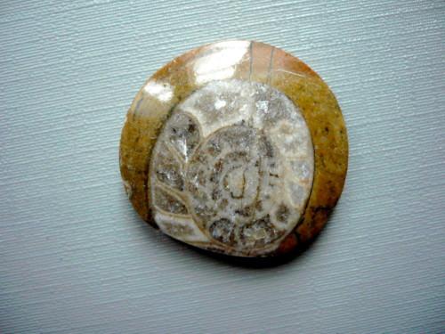 Amonit v matečné hornině 28 mm, č.39