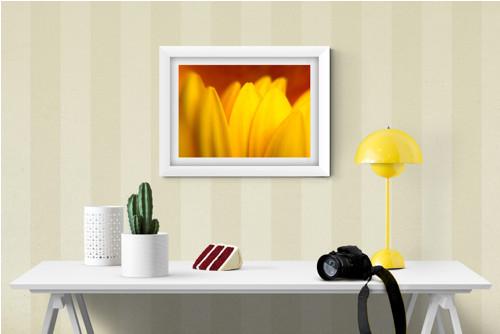 Žlutá gerbera fotografie 30x20