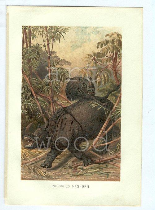 INDICKÝ NOSOROŽEC - litografie č.902