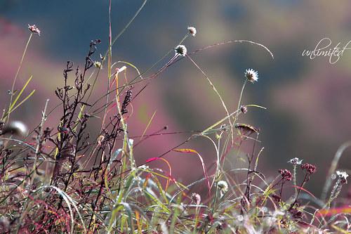 """Fotografie \""""Poezie v trávě\"""""""