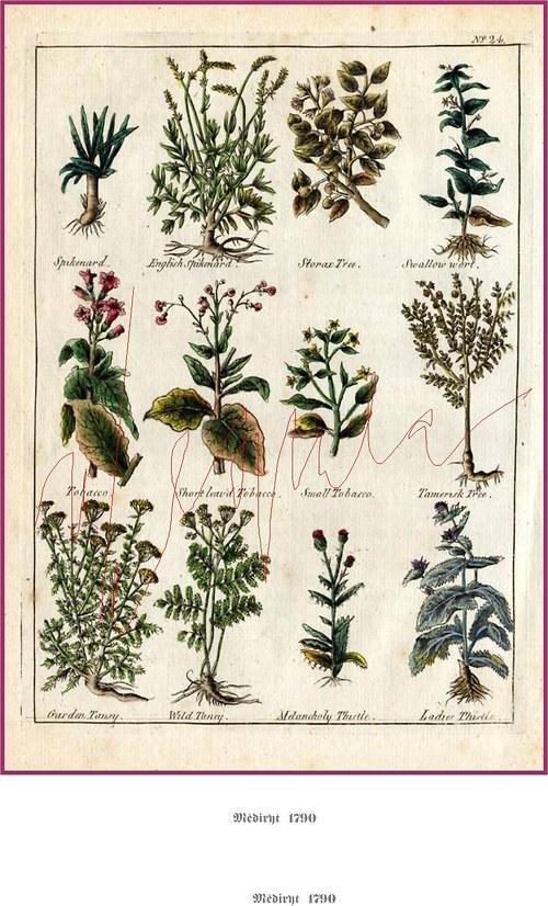 Léčivé rostliny II