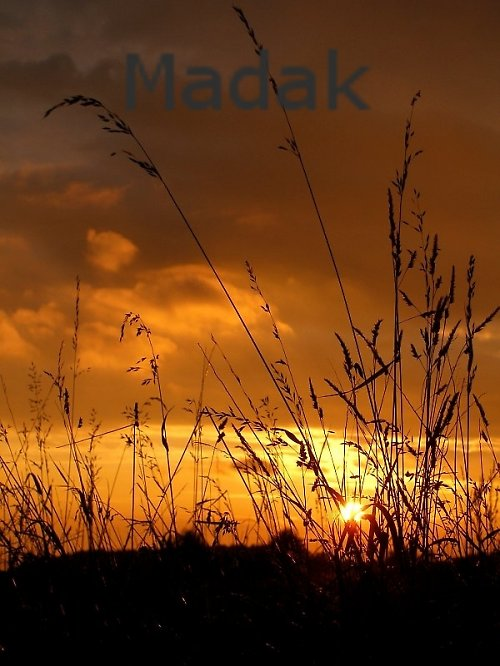 Slunce v trávě - autorská fotografie -AKCE Z 277,-