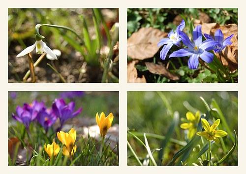 Spring Impressions III - sada 4 fotografií