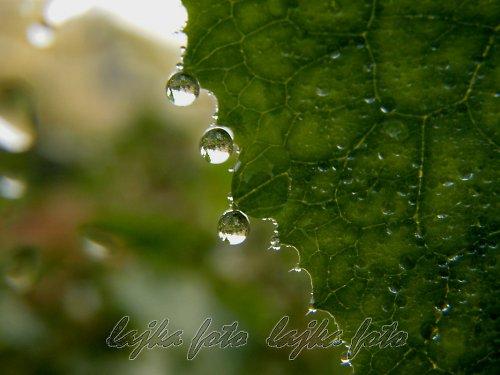 deštivá