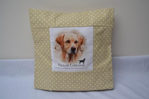 Labrador zlatý