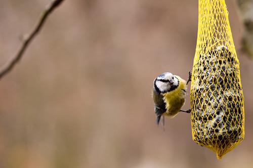 Ptáčková 2