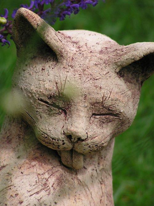 Kočka  si olizuje hřbet..(na objednávku)
