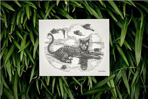 Panter na hladině • pohlednice přírodní