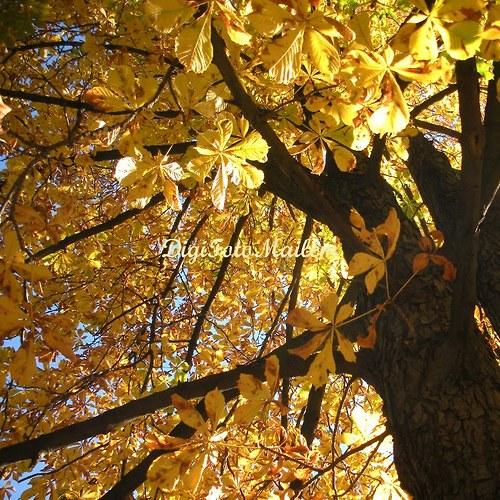 Strom v podzimním hávu II