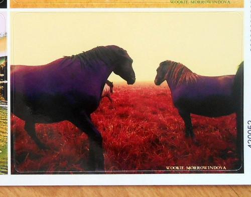 Fotonálepka: Fialoví koně