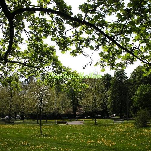 Jaro v městském parku II