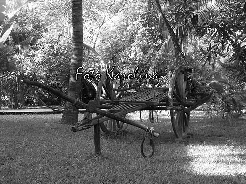 Fotografie Kambodža - Vozík