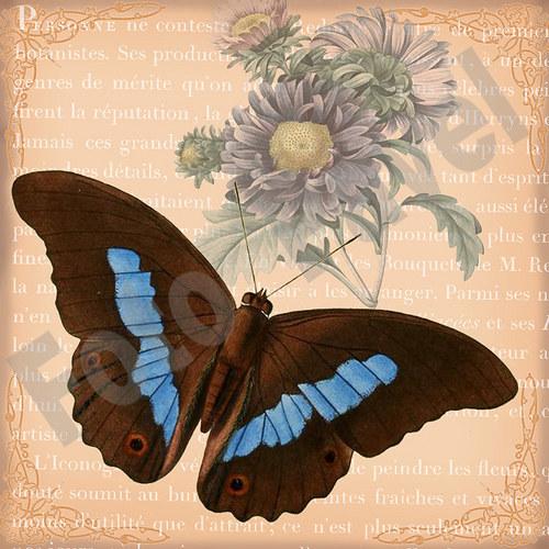 Vintage motiv - motýl 3