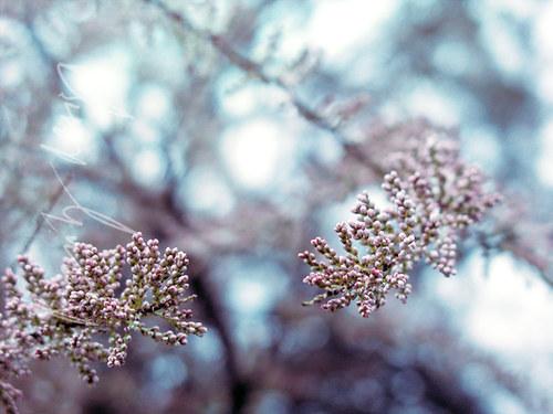 Winter flowers.. XII.