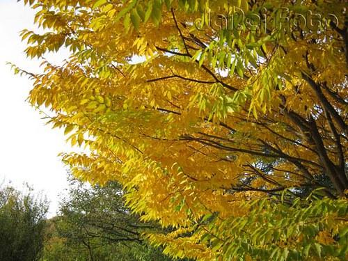 Žlutozelené listí