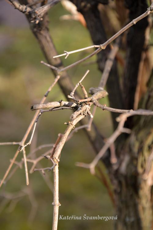 Větvička...fotografie
