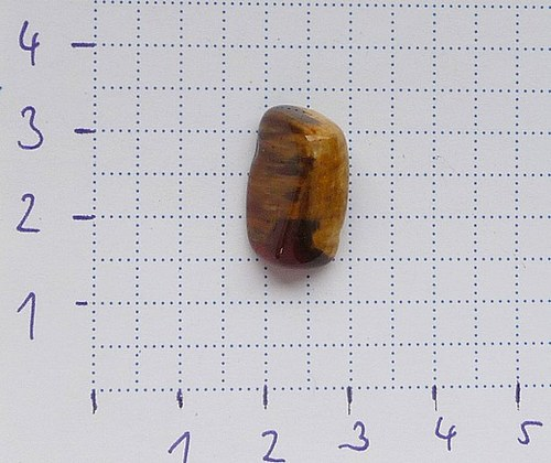 Zkamenělé dřevo