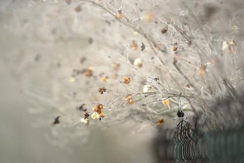V zahradách mrazivých - autorská fotografie A4