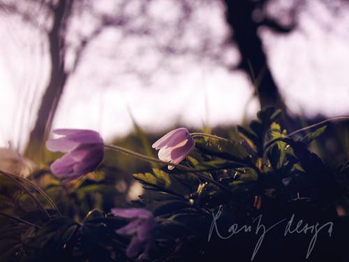 Spring VI.