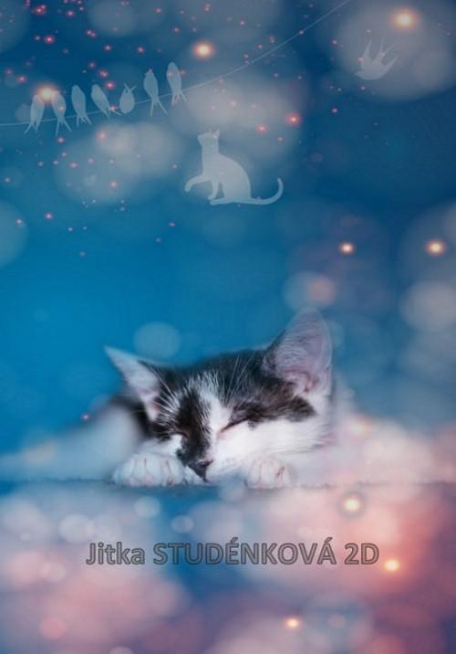 Kočičí sen V