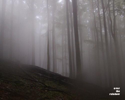 Mysterious forest IV -autorská fotografie, Giclée
