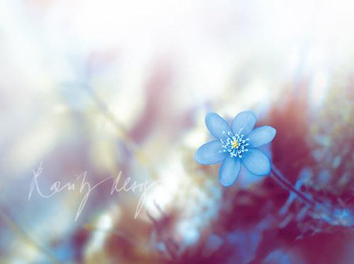 Spring XI.