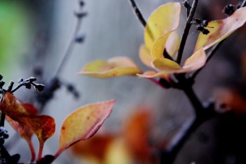 Ladný podzim