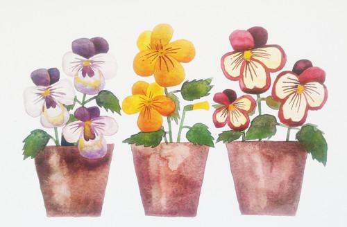 Jarní krásky