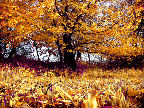 Podzim na Strážníku..