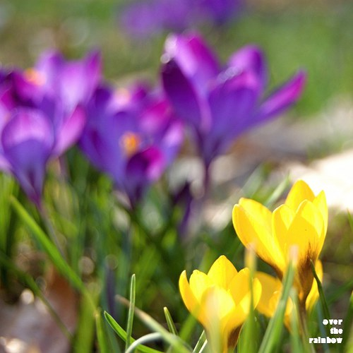 Spring impressions I - autorská fotografie, Giclee