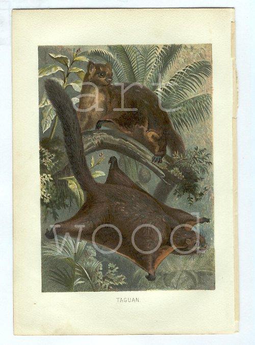 TAGUAN - litografie č.905
