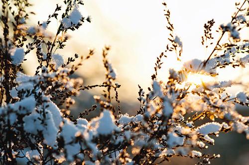 Pod tíhou sněhových vloček II