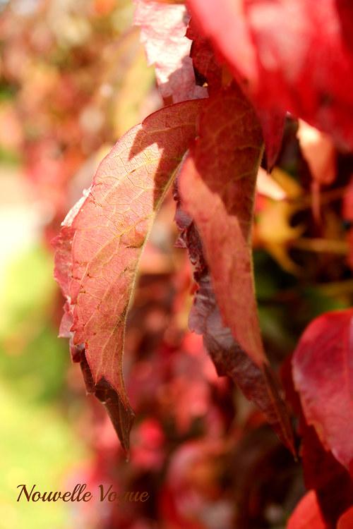 Popínavý podzim