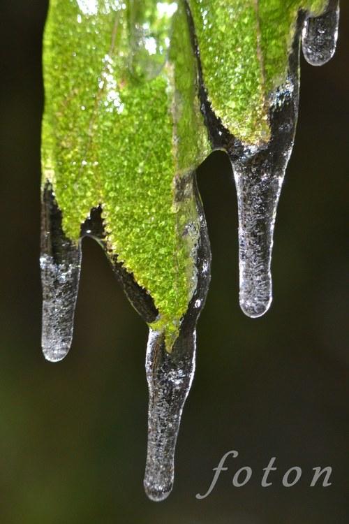 Ledové listy