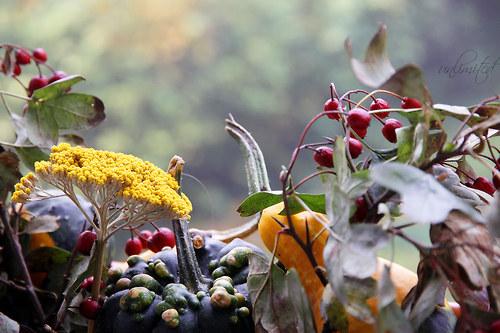"""Fotografie \""""Podzimní svět\"""""""